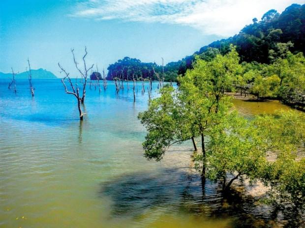 Parque Nacional de Bako, uma reserva natural de outro mundo