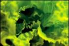 Uma salada não se tempera: vai-se aprendendo a temperar