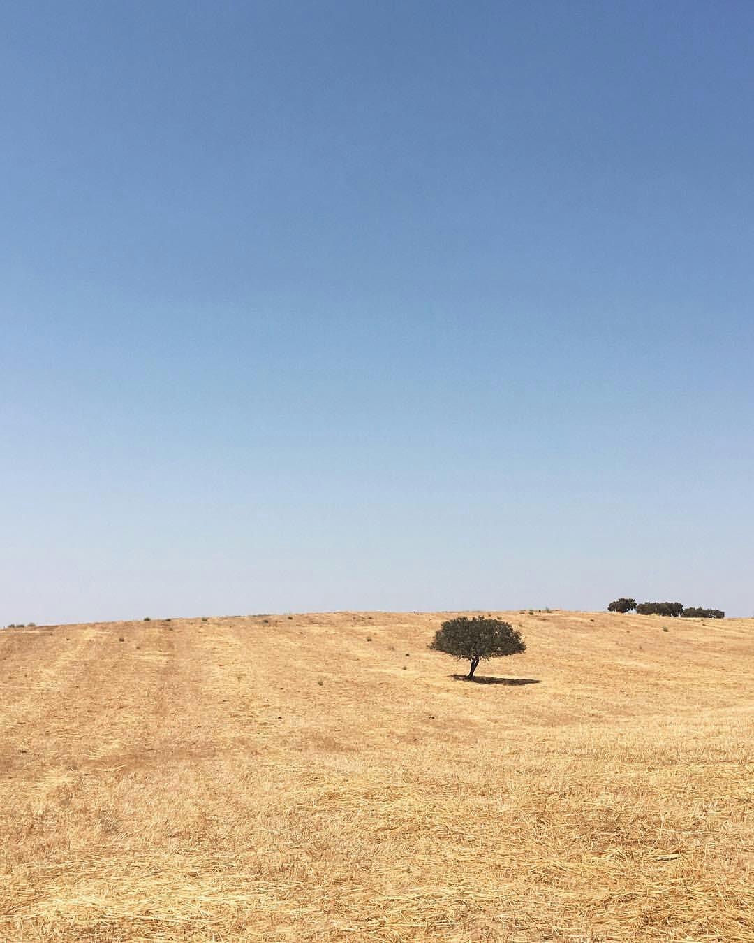 Catarina Paninho Oliveira (@catarinapaninho) trouxe-nos a paz e os grilos dos campos alentejanos.