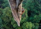 Wildlife Photographer of the Year: os vencedores de 2016