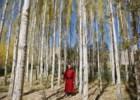 Tradição e turismo nos Himalaias