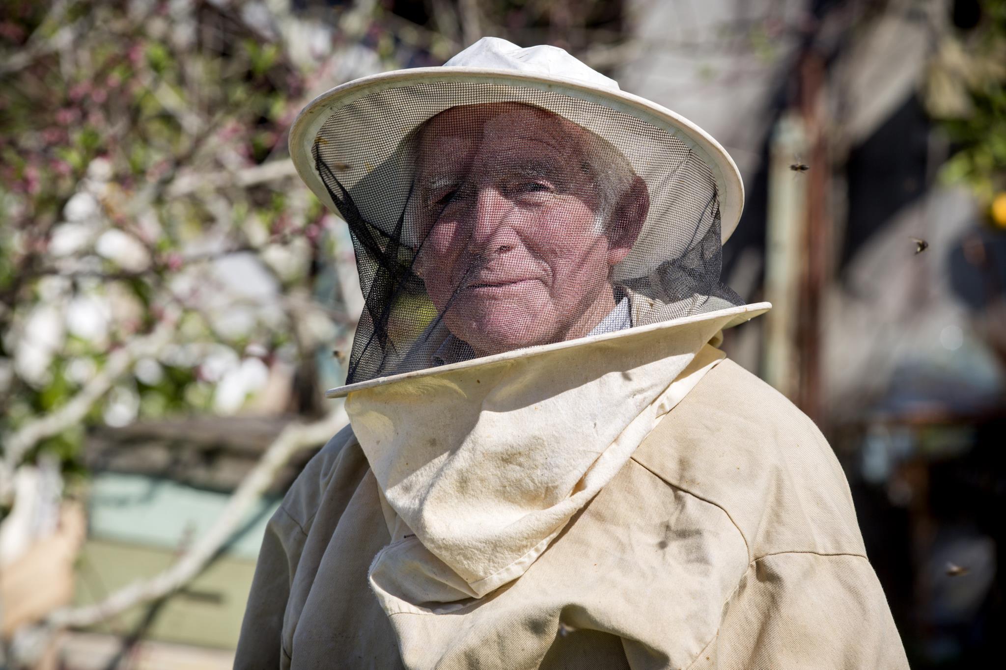 Os inimigos das abelhas são todos: o mel das abelhas do senhor Tomás é uma prova da existência de Deus