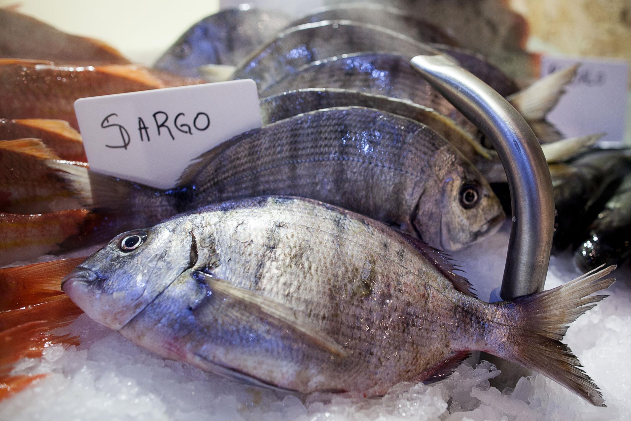 Consumo de peixe na gravidez não protege a criança de doenças respiratórias