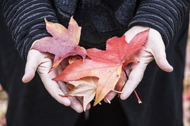 A Festa do Outono chega a Serralves