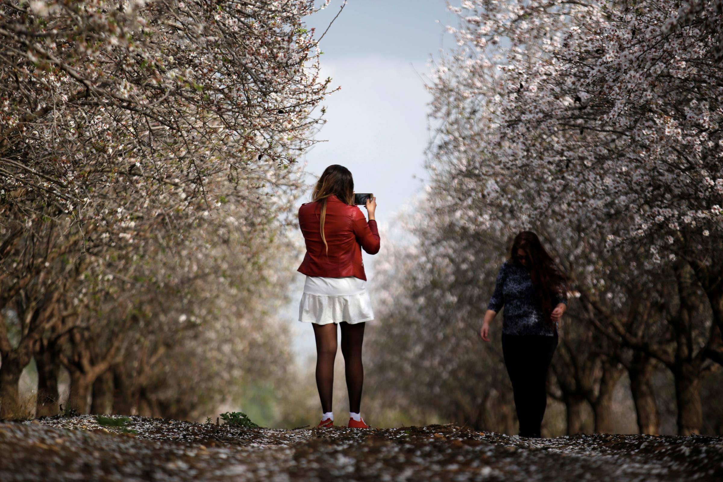 As cerejeiras em flor e a Primavera japonesa