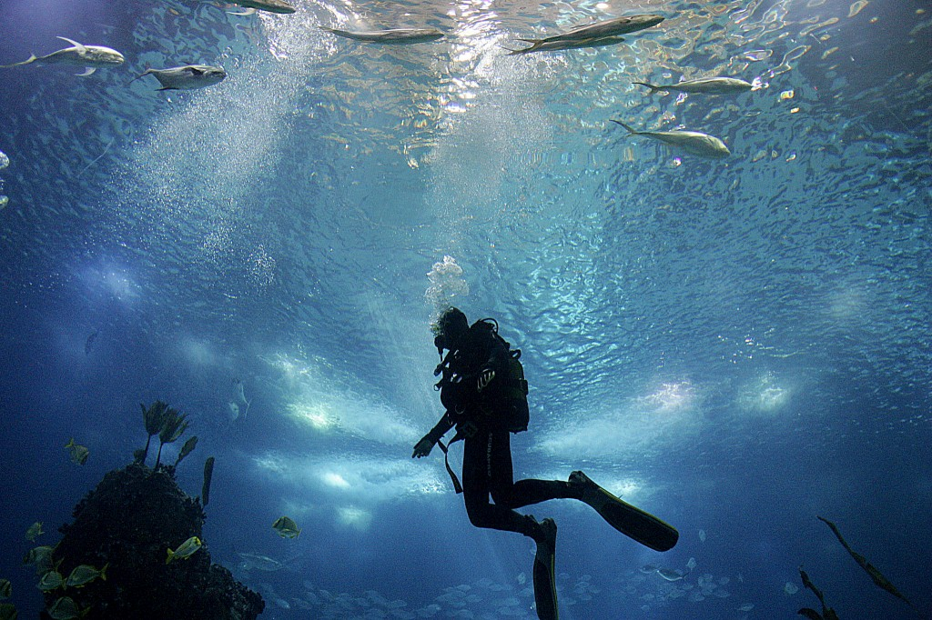A ideia é criar um recife artificial para os mergulhadores visitarem