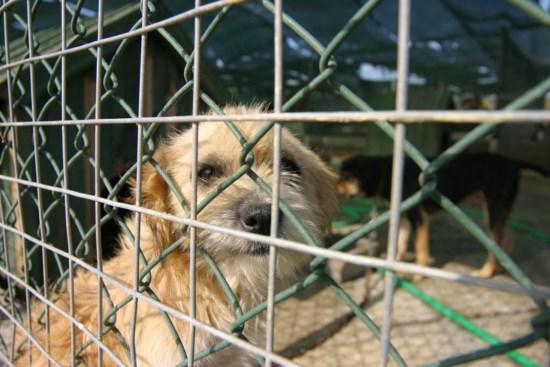 Muitos donos sentem agora dificuldade em fazer face às despesas com animais de estimação
