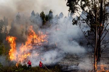 Na última semana houve quase 1900 fogos