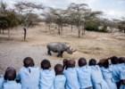 O rinoceronte branco e outros animais que precisam de ajuda