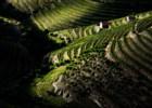 O Douro Património Mundial é celebrado em exposição com 324 fotografias