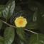 No jardim, existem cerca de 800 exemplares, de diferentes espécies e cultivares