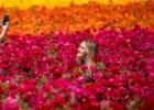 Os campos floridos e os <i>likes</i> no Instagram