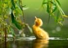 Estas são provavelmente as melhores fotografias de aves do mundo