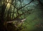 João Rodrigues (e uma desova de salamandras) é um dos vencedores Wildlife Photographer of the Year