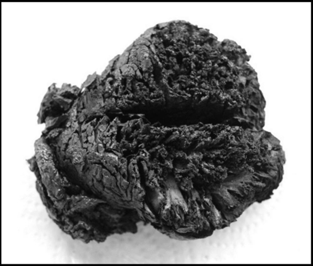 Um dos cérebros fossilizados com 4000 anos