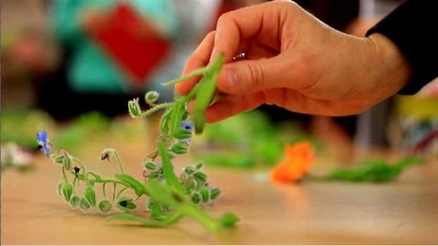 Workshop de Flores Comestíveis com Fernanda Botelho