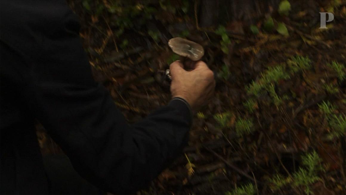 Os mistérios dos cogumelos de Sintra