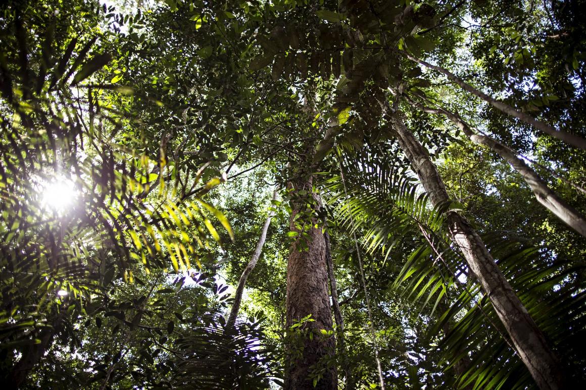 Viagem à Amazónia