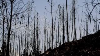 As elevadas temperaturas que se sentem não ajudam o combate aos incêndios