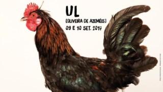 Cartaz com a galinha vencedora de Ul, em Oliveira de Azeméis