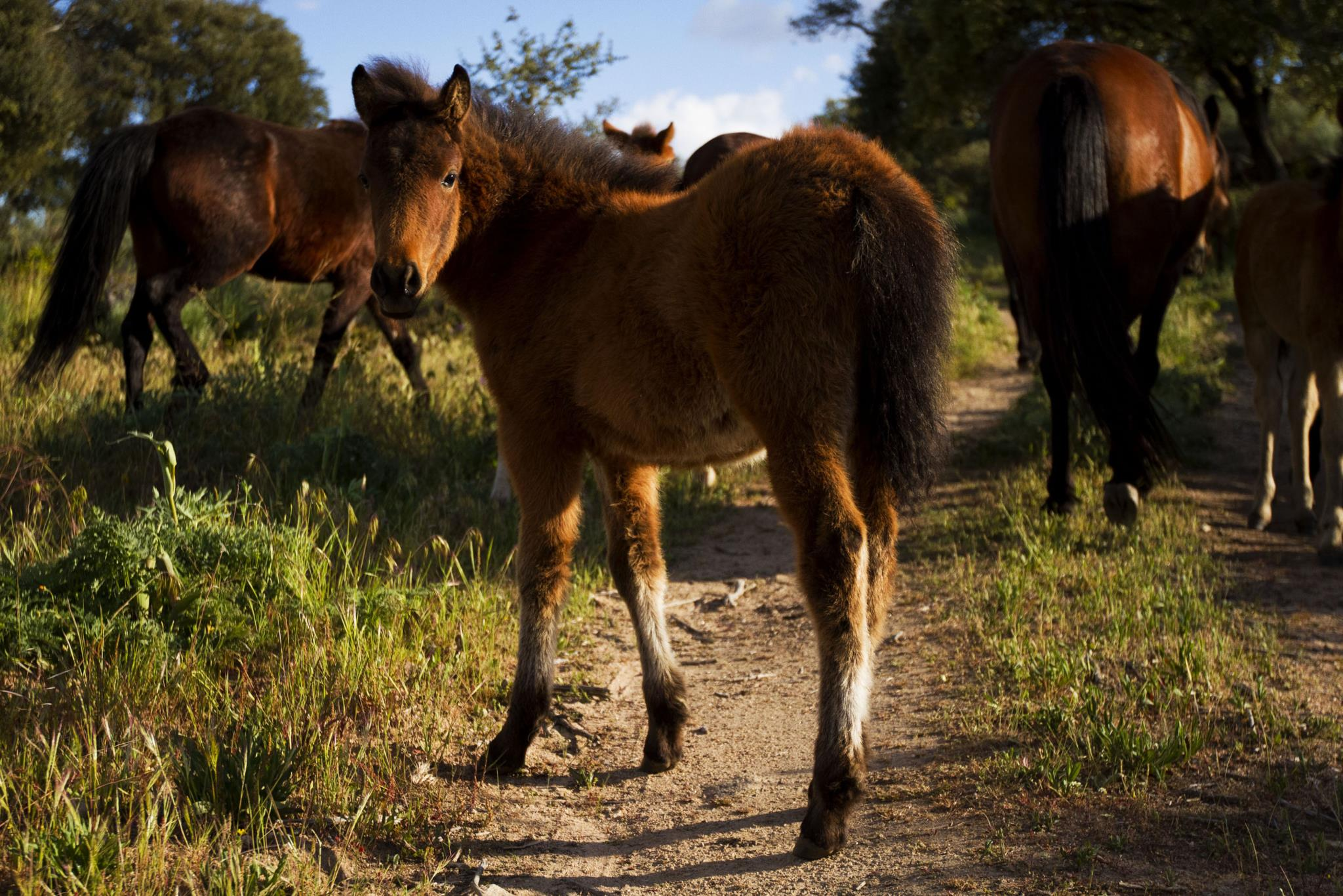 Ambiente. A cavalo pela Ribeira Lima, uma nova forma de conhecer Viana e os garranos