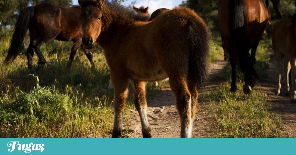 A cavalo pela Ribeira Lima, uma nova forma de conhecer Viana e os garranos