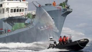 A Sea Shepherd antecipa a campanha com o objectivo de zero mortes de baleias este ano