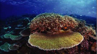 Recifes de corais, Grande Barreira de Corais, Pullman Reef Hotel Casino, corais Stony