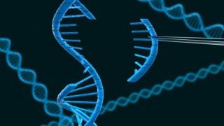 Mutação, Genética, Engenharia Genética