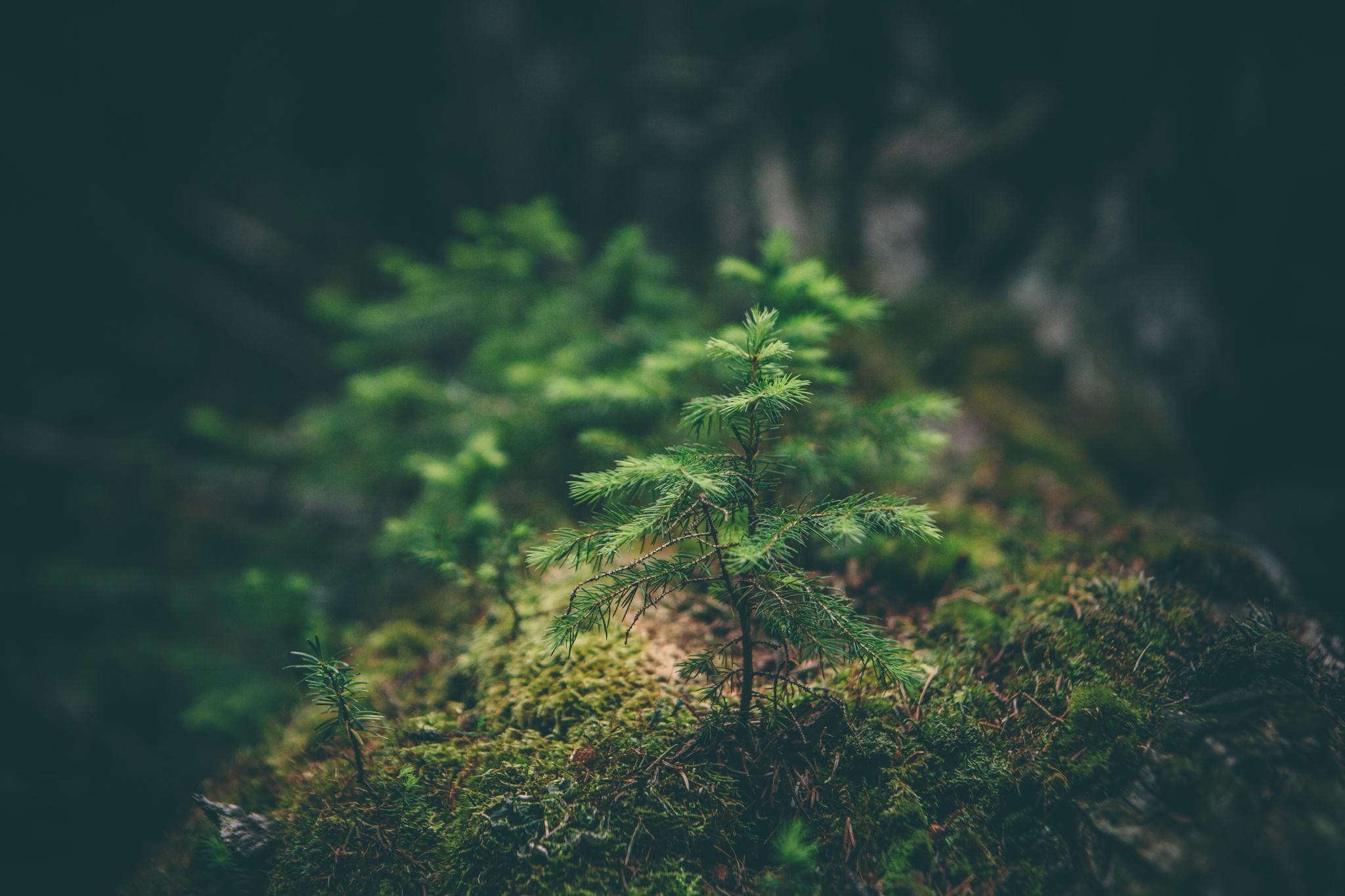 Um recorde sustentável: Etiópia planta mais de 350 milhões de árvores num dia