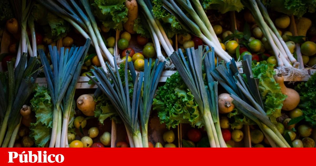 Alimentos estragados dão electricidade na Amadora
