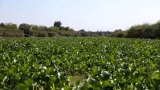 ciencia,agricultura,ambiente,rios,agua,biologia,