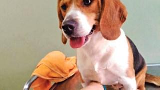 Um dos 12 cães tratados com o novo composto químico