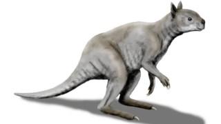 ,Simosthenurus