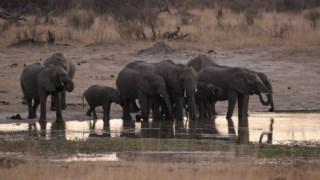 Uma manada de elefantes junto à água no parque nacional de Hwange, no Zimbabwe