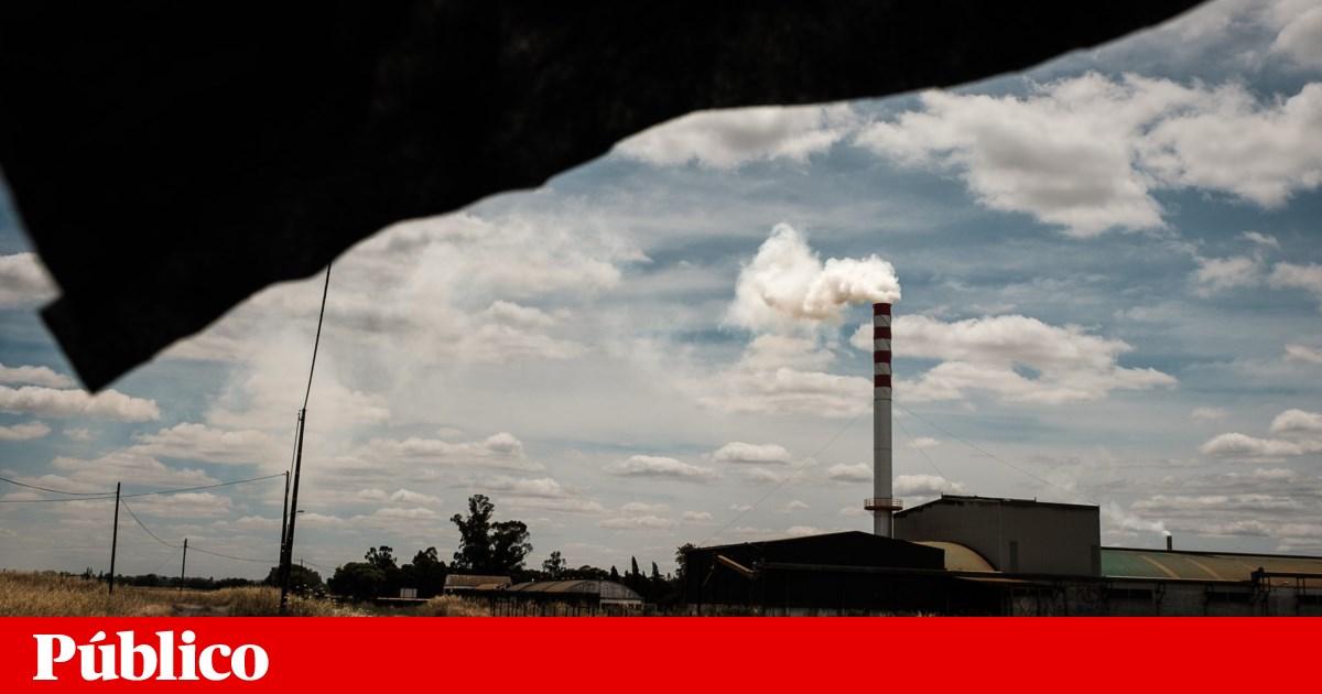 Fábricas de bagaço no limite ameaçam campanha da azeitona