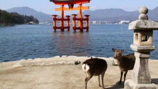 ,Portão Torii Flutuante de Itsukushima (Temporariamente em Construção)