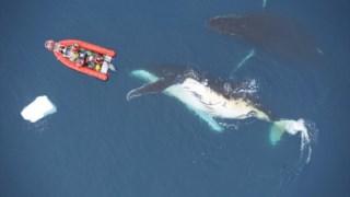 ,Baleias