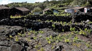 Paisagem da Cultura da Vinha da Ilha do Pico