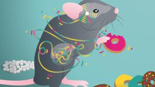 Pensar com a barriga: identificado um novo eixo digestivo-cerebral