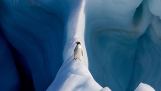 Fotografia vencedora (Mundo Natural)