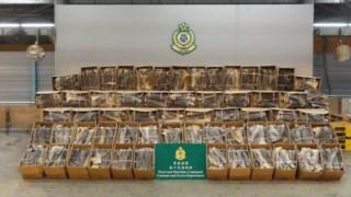 Agentes da alfândega desconfiaram de documentos e rotulagens em espanhol, o que levou à abertura das embalagens, que supostamente continham peixe seco
