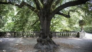 recomecar,jardim-botanico-universidade-coimbra,natureza,passeios,fugas,coimbra,