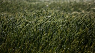 herbicidas,pragas,alimentacao,ciencia,agricultura,alentejo,