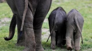 animais,ambiente,mocambique,africa,trafico-especies,conservacao-natureza,
