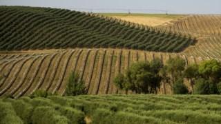 alimentacao,alqueva,economia,agricultura,alentejo,ambiente,