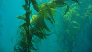 pradarias-marinhas,oceano,ciencia,dioxido-carbono,alteracoes-climaticas,