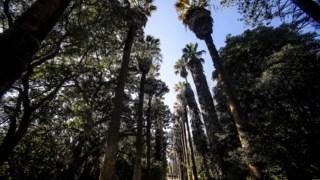 arvores,universidade-lisboa,patrimonio,lisboa,ambiente,jardim-botanico,