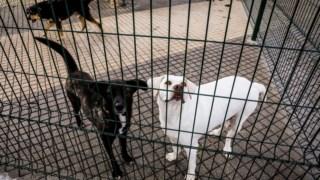 pet,animal,p3,legislacao,animais,direitos-animais,