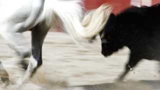 pev,pan,animais,direitos-animais,touradas,be,